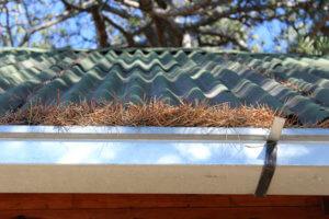 rain gutter with pine needles